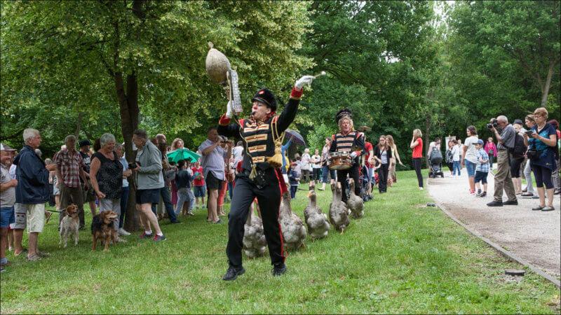Les deux artistes de ce spectacle encadrent un défilé d'oie. Les spectateurs se pressent autour de la manifestation.